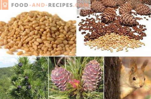 Noix de pin - description, propriétés, utilisation en cuisine. Recettes aux pignons de pin.