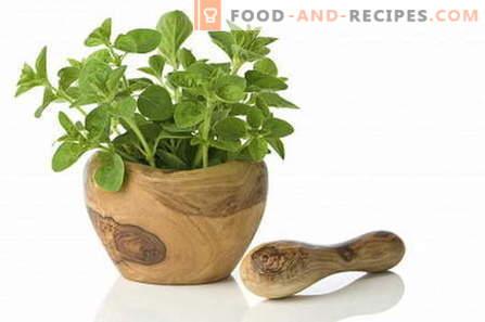 Origan - description, propriétés, utilisation en cuisine. Recettes à l'origan.