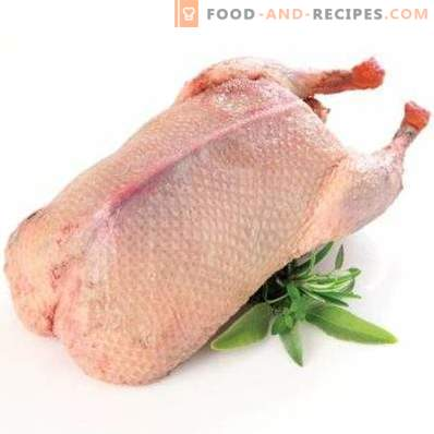 Viande de canard: avantages et inconvénients