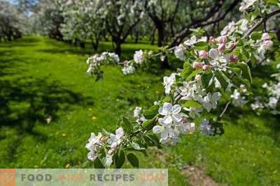 Effective garden care products: no - for diseases and pests, ...