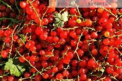 Comment conserver les groseilles rouges