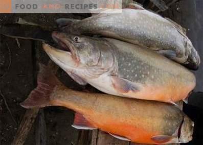 Sachets à poisson: avantages et inconvénients