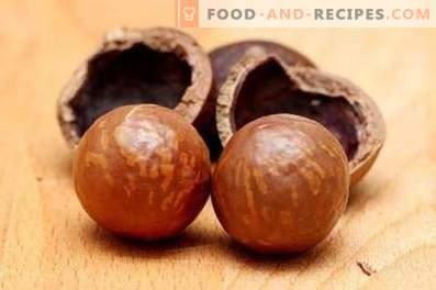 Noix de macadamia: avantages et inconvénients