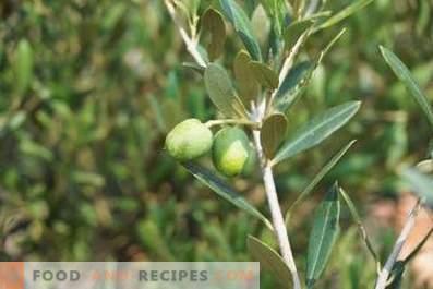 Comment faire de l'huile d'olive