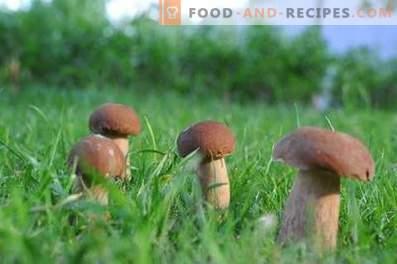 Comment mariner les champignons blancs pour l'hiver