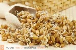 Comment faire germer le blé