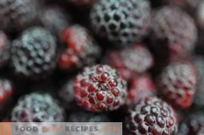 Blackberry: propiedades y contraindicaciones útiles