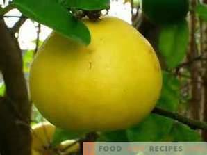 Comment choisir un pomelo