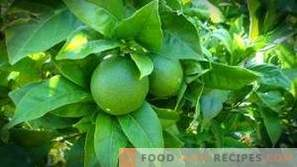 En quoi un citron est-il différent du citron vert