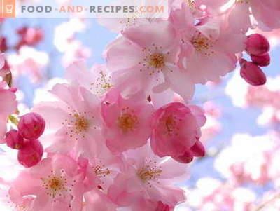 Confiture Sakura: comment cuisiner
