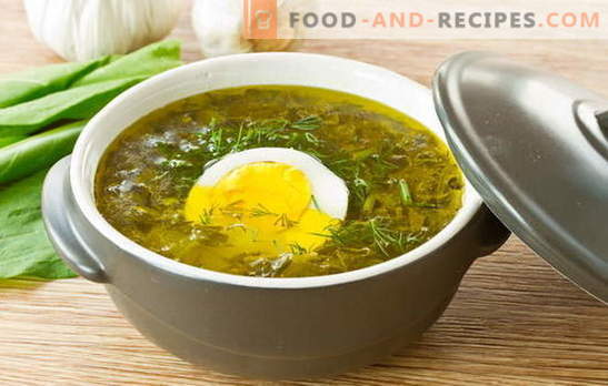 Sorrel soup - summer mood charge! Recipes for oxalic soup with egg, meatballs, rice, chicken, stew