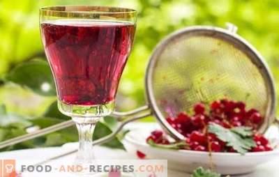 Vin de groseille: les principales étapes de la fabrication de vins de fruits. Recettes de vins de groseilles faits maison