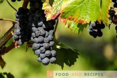 Chach de raisins
