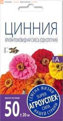 Zinnia - les meilleures variétés et caractéristiques de culture